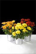 Mixed Interior Seasonal Flowers