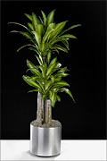 N-P-K Associates, Inc. | Interior Plant Rental Specialists