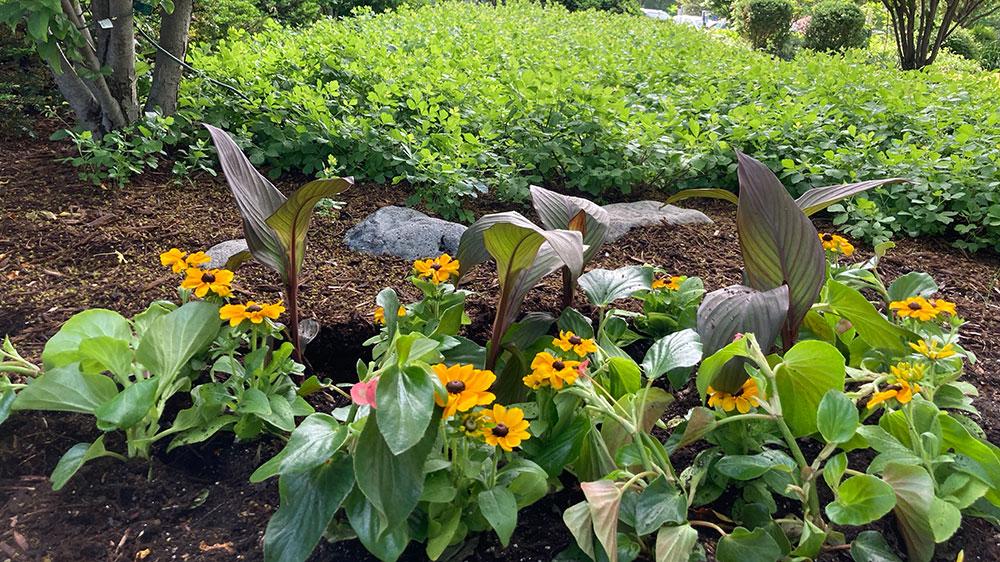 design exterior plants