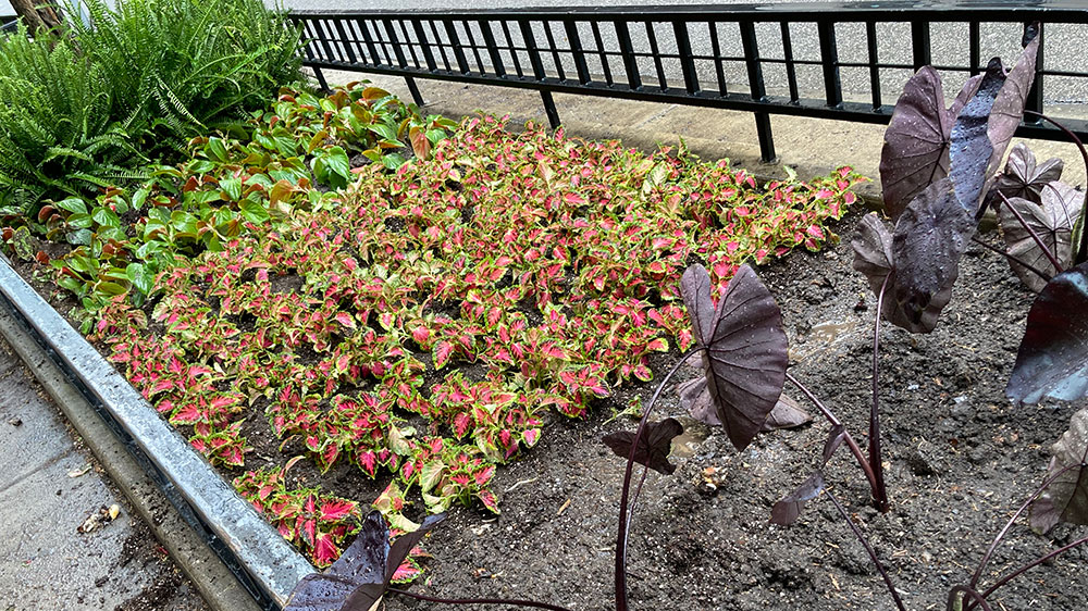 install exterior plants