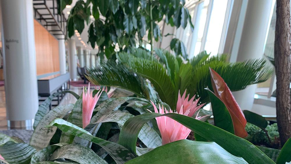 install interior plants