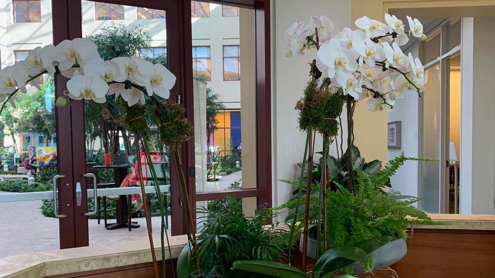 maintain interior plants